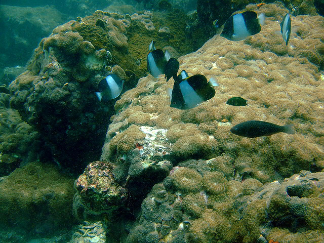Other croup of butterfly fish