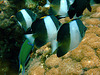 Close to the butterfly fish
