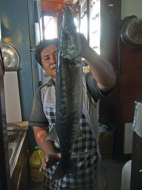 Caught Barracuda
