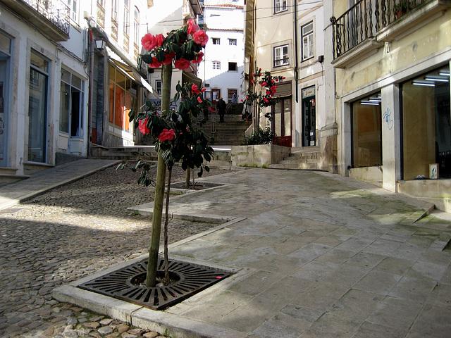 Coimbra, upwards the University