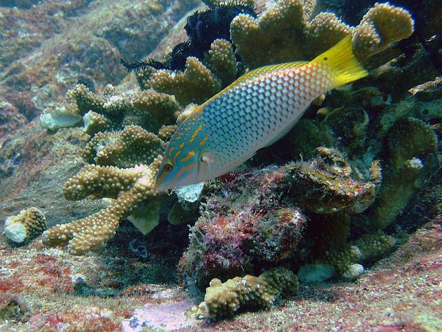 Underwater scene on our diving safari