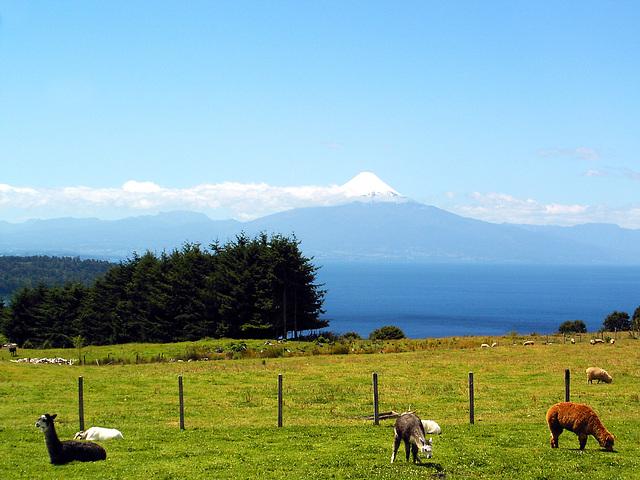 Lamas, Lago de LLANQUIHUE