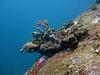 Coral motive underwater