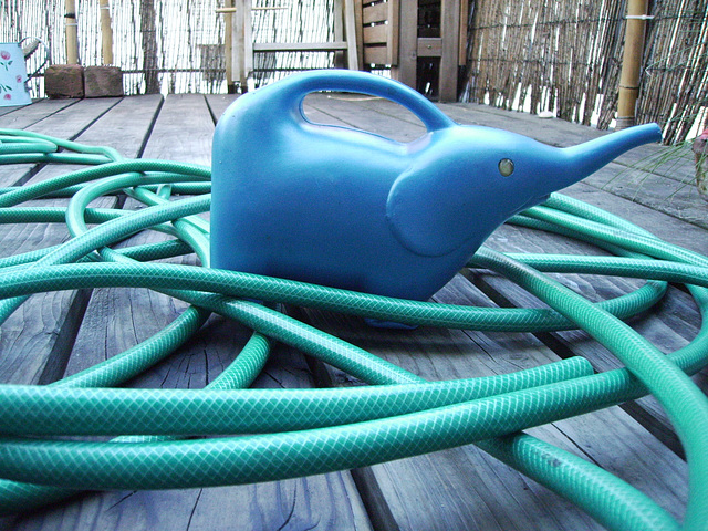 elephant trapped in a hose maze