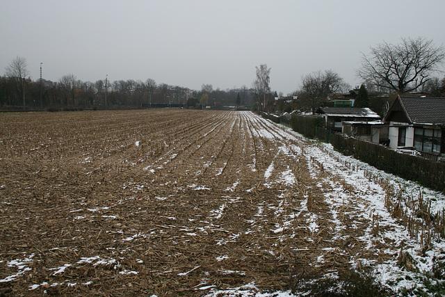 12 cornfield in november