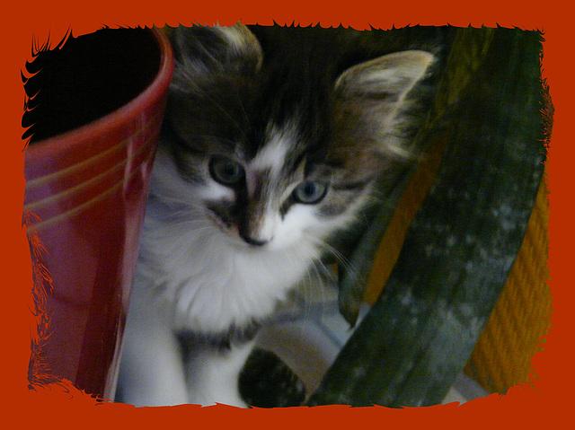 minouche chat