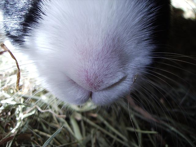 nosy nose