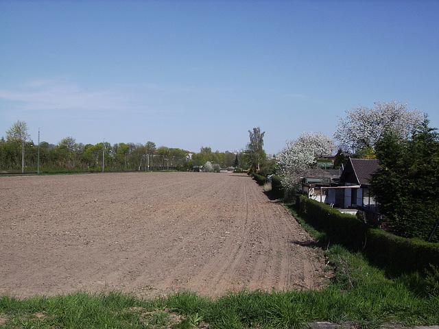 04 cornfield in april