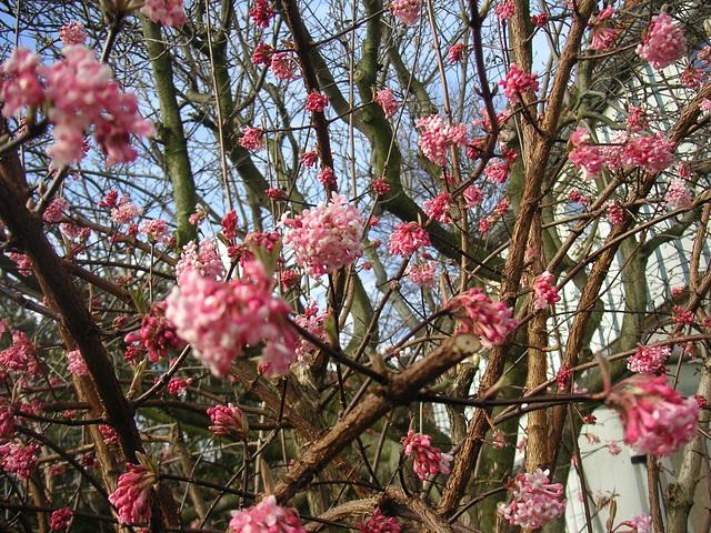 Blüten am Morgen - matenaj floroj
