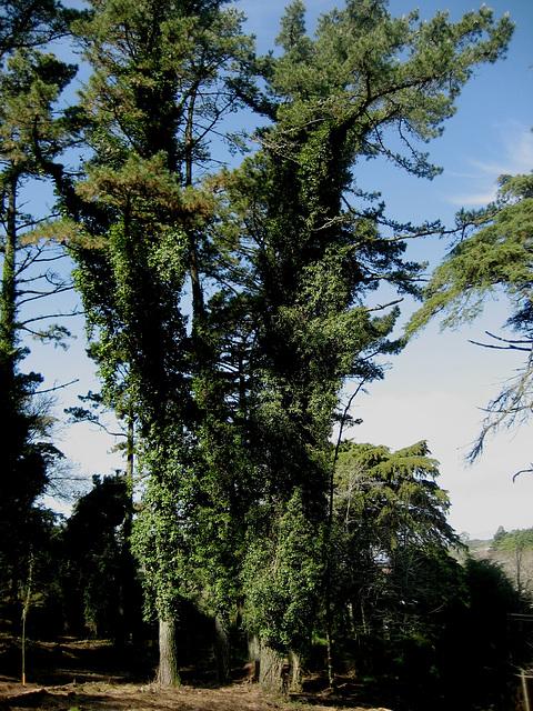 Serra de Montejunto, wood sentries