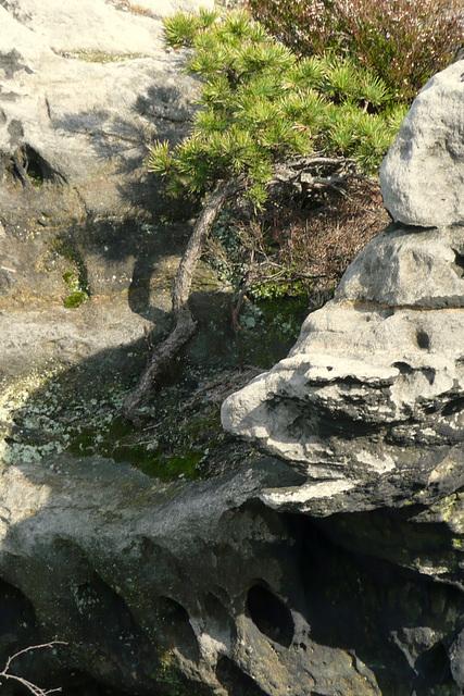 leben auf Stein