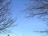Branches et ciel bleu - Branches and blue sky  /  Dans ma ville - Hometown - 3 février 2009  -  Photo originale.