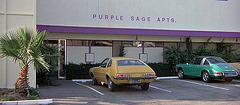 3 Women - Purple Sage Apartments (47)