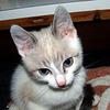 Pierres Katze