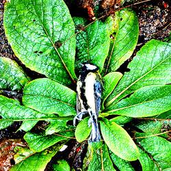 Dead bird  - Morta birdo - Tote Meise