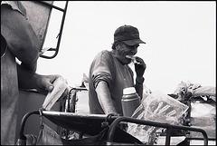 ontario tobacco harvest