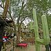 Cabot's Pueblo (7014)