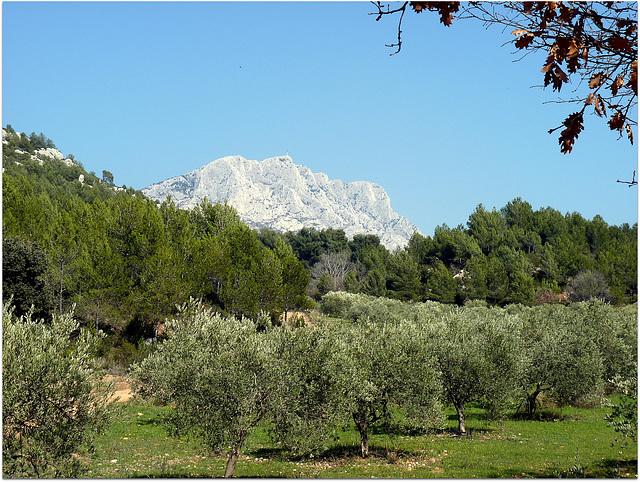 La Ste Victoire sur fond d'oliveraie et pinède