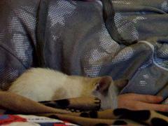 Pierres Katze macht Faxen