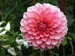 Happy Friday Flower