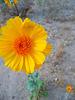 Yellow Flower (3720)