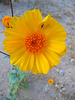 Yellow Flower (3722)