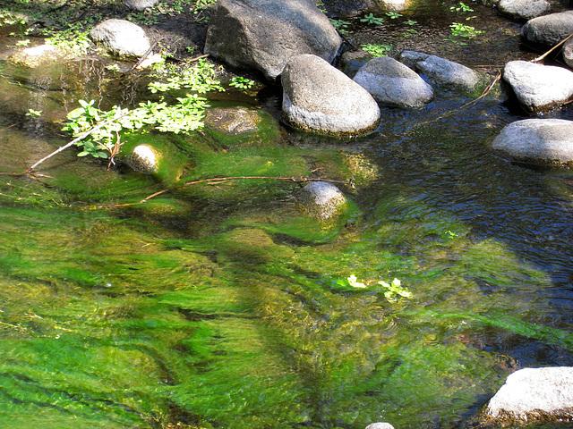 South Fork Of The San Jacinto Creek (0371)