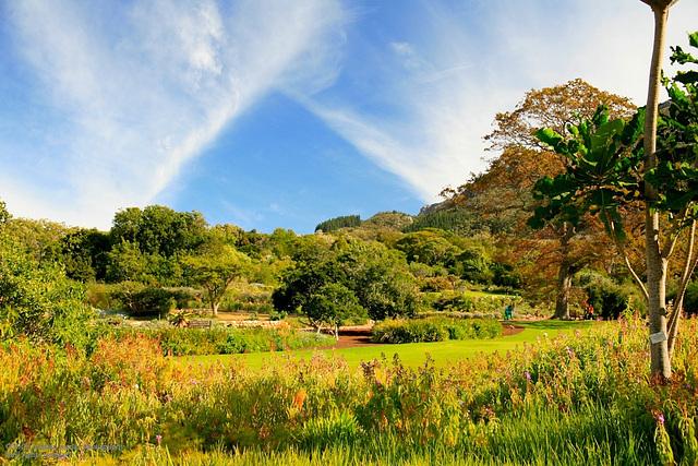 Kirstenbosch Botanical Garden Cape Town May 2006 0054
