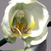 orchid study