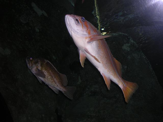 2 - keine kleinen Fische