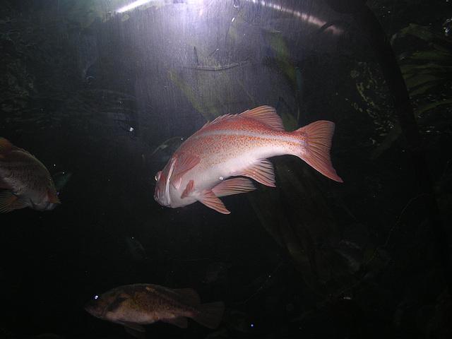 4 - keine kleinen Fische
