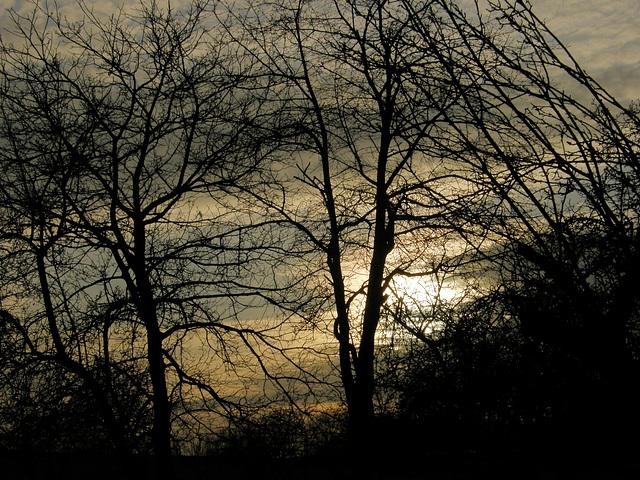 Abenddämmerung - Twilight