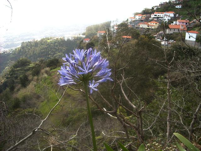 oberhalb von Funchal