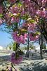 Branches de prunus