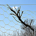 Evasion ratée- Une branche capturée en pleine élan