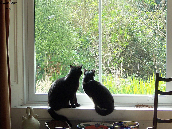 Pippin & Roxy are intensely looking out the window