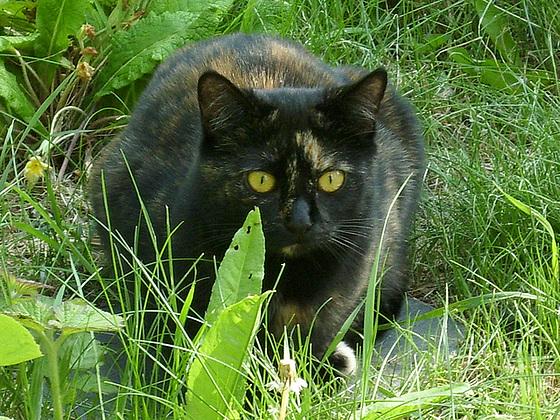 Tippi's intense gaze