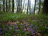 Frühling im Laubwald / Springtime in deciduous forest