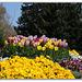 Tulipes au coeur