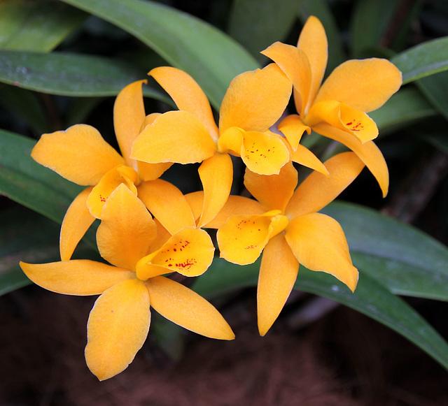 Orchideenausstellung Insel Mainau