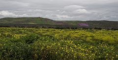 Campos de Mengibar (Ver en grande y sobre negro)
