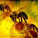 pollinisation2
