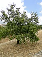 2012-07-24 Agrigento   104