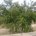 2012-07-24 Agrigento G  76