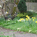 After a long winter, this garden is showing spring in it's glory