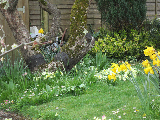 A truly springtime garden