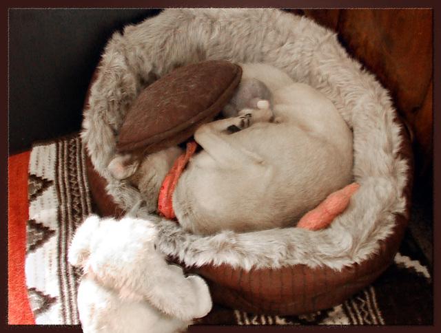Lilli in bed :-))