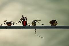 Poison Ivy Melancholy