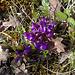 Orchidée du Quercy