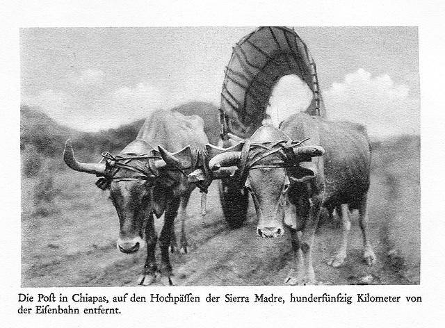 Foto de B. Traven: La poŝttransporto en Ĉiapas / Meksiko 150 kilometrojn for de la fervojo (ĉirkaŭ 1928), fotita per platkamerao